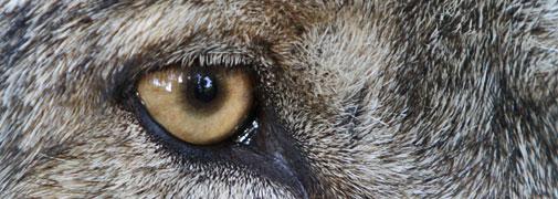 Wölfe im Wolfcenter Dörverden