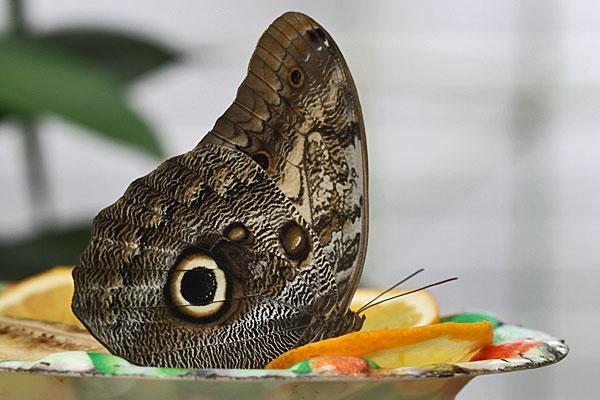 Steinhuder Meer - Schmetterlingsfarm