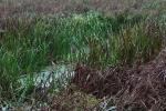 Steinhuder Meer - Meerbruchwiesen