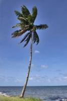 Palme auf Fidschi