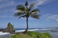 Palme auf Samoa