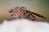 Insekt auf Fliegenpilz