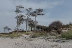 Baumflüchter am Weststrand