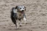 Hund am Darß - Ostsee