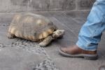 Lollo die Schildkröte