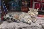 Katze in Peru
