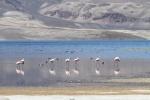 Flamingos -  Lago Chungara
