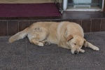 Hund - Ushuaia - Argentinien