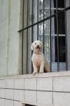 Hund - Colonia del Sacramento - Uruguay