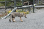 Fuchs - Puerto Montt - Chile