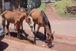 Pferde - Osterinsel - Chile