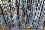 Steinhuder Meer - Spiegelung