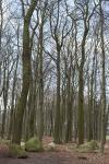 Findlingswald Neuenknick
