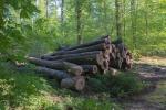 Wald bei Feggendorf