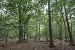 Der Zauberwald bei Zingst