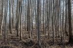 Bäume im Landkreis Schaumburg