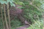 Wanderung zur Teufelsbrücke im Deister