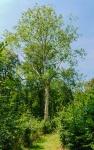 Schaumburger Wald - Schloss Baum