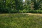 Schaumburger Wald