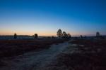 Naturpark Südheide - vor dem Sonnenaufgang