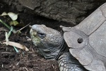 New York - Schildkröte