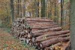 Wald in Schaumburg