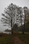 Steinhuder Meer im Nebel
