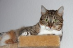 Sally - Dezember 2010