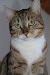 Sally_20_12_2010_01.jpg