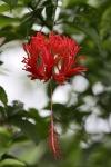 Blumen auf Palawan
