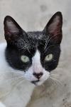 Katzen auf Palawan