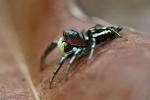 Spinnen auf Palawan