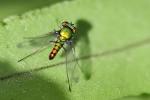 Insekten auf Palawan