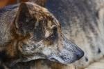 Hunde auf Palawan