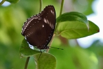 Palawan - Schmetterling