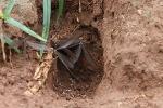 Addo Elephant Park - Fliegende Ameisen